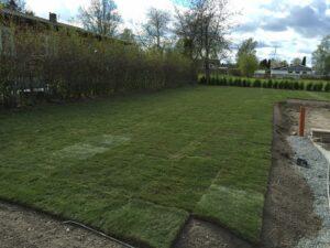 gräs5